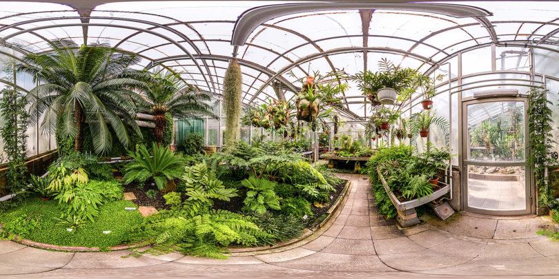 Botanischer Garten Gießen - Gewächhaus für Farne und farnverwandte Pflanzen
