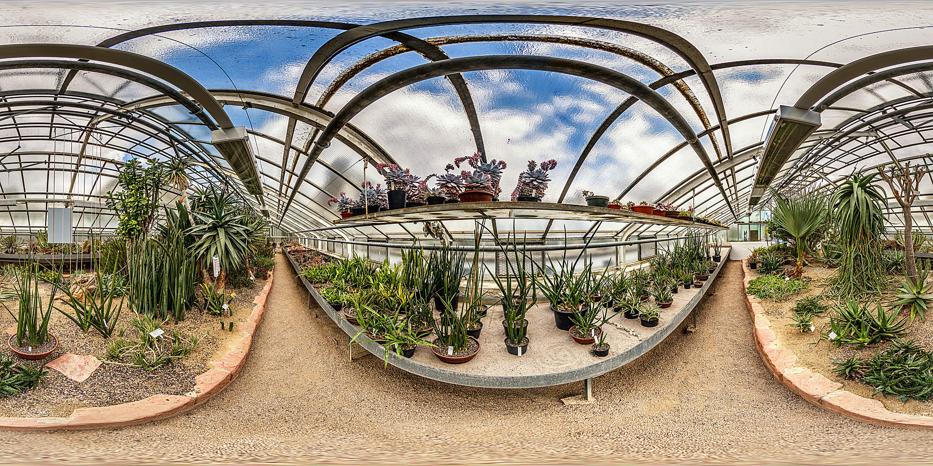 Botanischer Garten Heidelberg - Sukkulenten