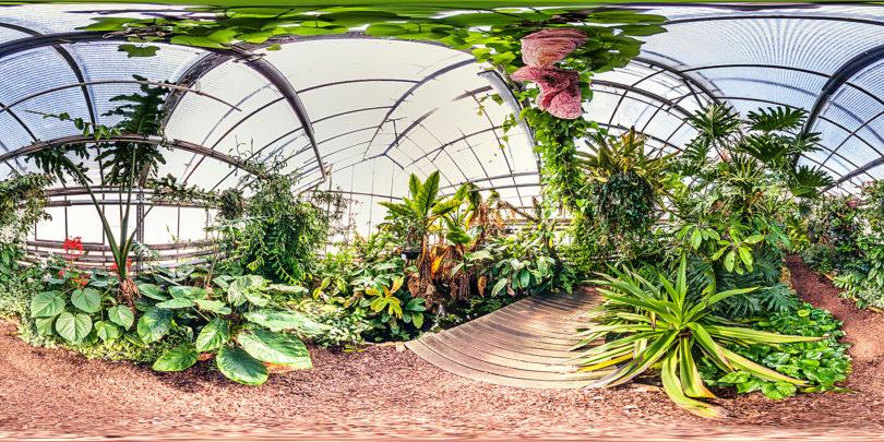 Botanischer Garten Mainz - Gewächshaus Wasserpflanzen