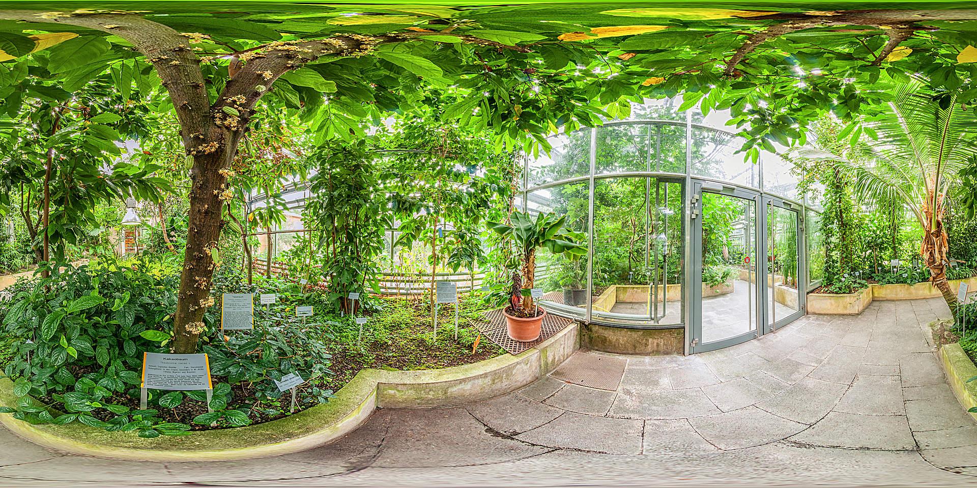 Botanischer Garten Würzburg -Tropische und subtropische Nutzpflanzen