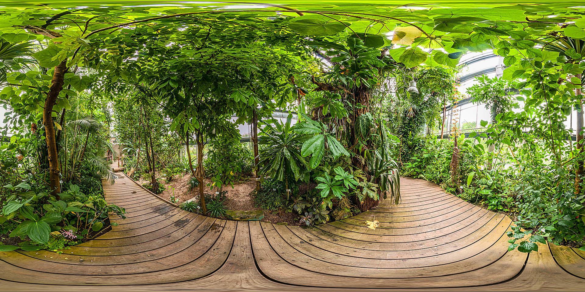 botanischer garten w rzburg tropenschauhaus tieflandregenwald panorama fotos. Black Bedroom Furniture Sets. Home Design Ideas