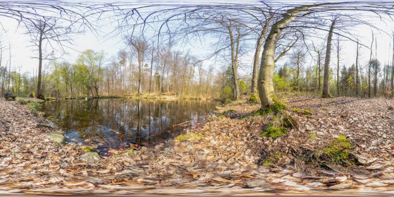 Teich an der Darmbachquelle