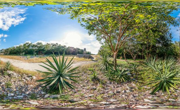 Sisal Pflanze in Dzibilchaltún, Yucatán
