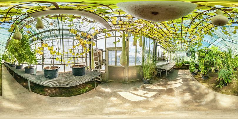 Botanischer Garten Mainz - Gewächshaus Tropische Nutzpflanzen