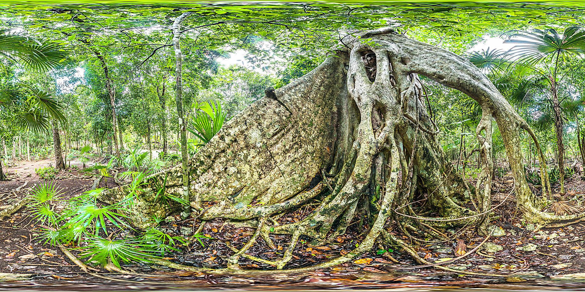 Regenwald in Quintana Roo, Mexiko