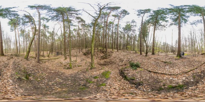 Wald nahe des Eleonoren Brunnen in Darmstadt