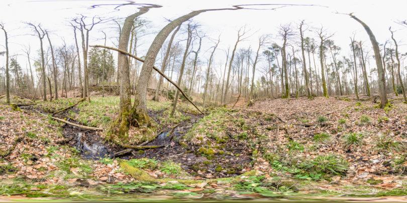 Waldlehrpfad an der Darmbachaue Darmstadt