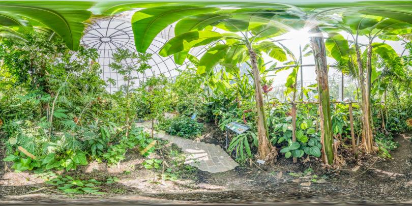 Botanischer Garten Zürich - Virtuelle Tour